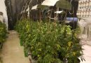 700 plants de Marijuana découverts dans un appartement d'Ashdod ! (Photos)